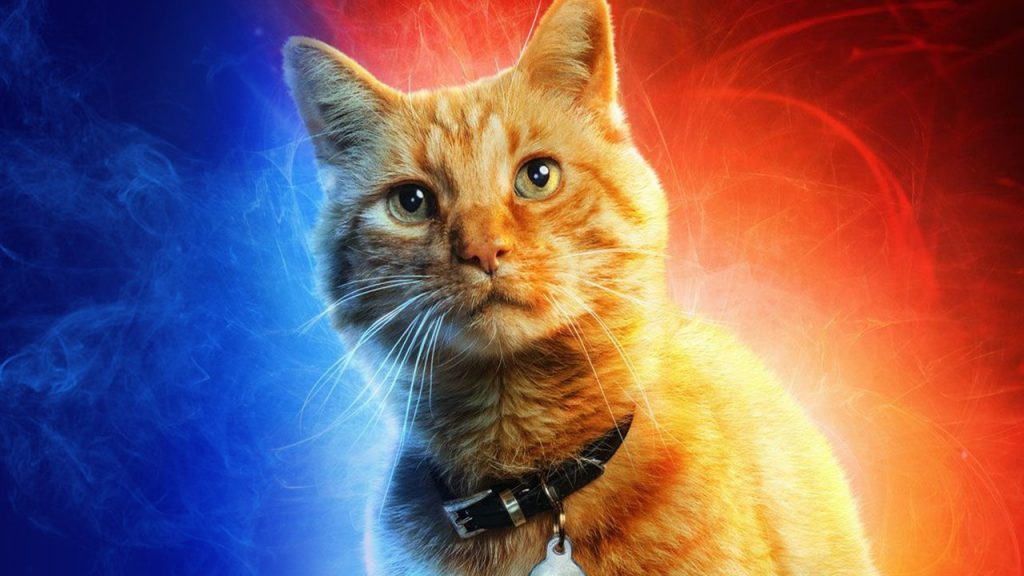 Kucing Captain Marvel