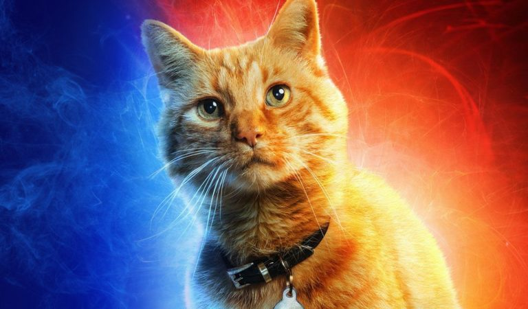 Kucing Captain Marvel: Goose The Cat
